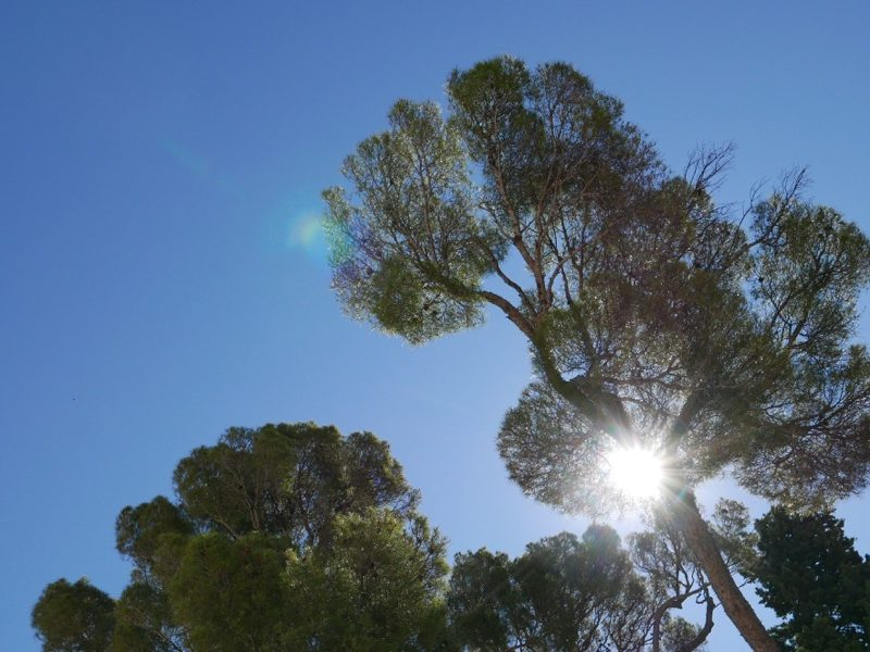 trees and sun Nimes